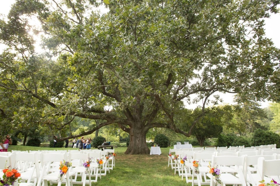 DIY ceremony decorations willow tree northern virginia outdoor wedding