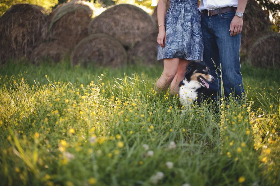virginia farm engagement pictures (4)